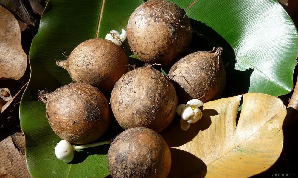 Produite à Tahiti, l'huile de tamanu possède de multiples vertus extraodinaires