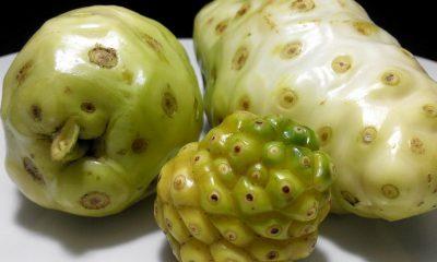 Noni - Un fruit aux vertus extraordinaires