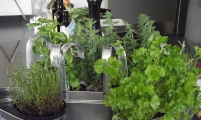 Herbes fraîches : un parfait allié santé