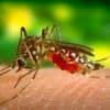 Avant que l'épidémie de dengue soit déclarée, comment se protéger efficacement des moustiques ?