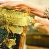 Le miel possède de nombreux bienfaits. Découvrez-les dans cet article.
