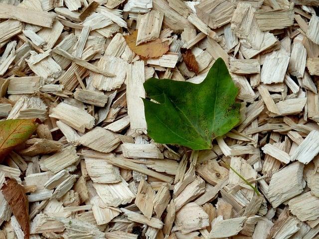 Dans une démarche écologique, le paillage a de nombreux avantages.